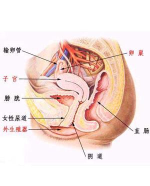 阴道炎的危害有哪些